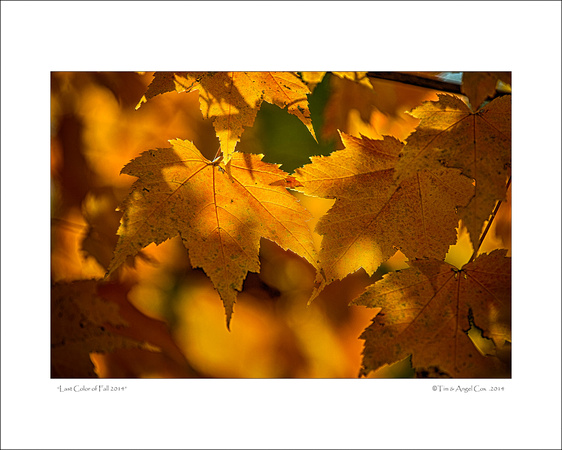 Fall Leaves PHOTOGRAPH